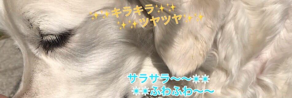 ドッグソープ キャットソープ 無添加で犬と猫が舐めても安心安全な手作り石鹸「わんにゃんGOLDSOAP」/ペットと飼い主様の為のクレイテラピー アロマフランス認定講座/アニマルクレイテラピー講座